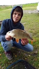 Cracking Perch